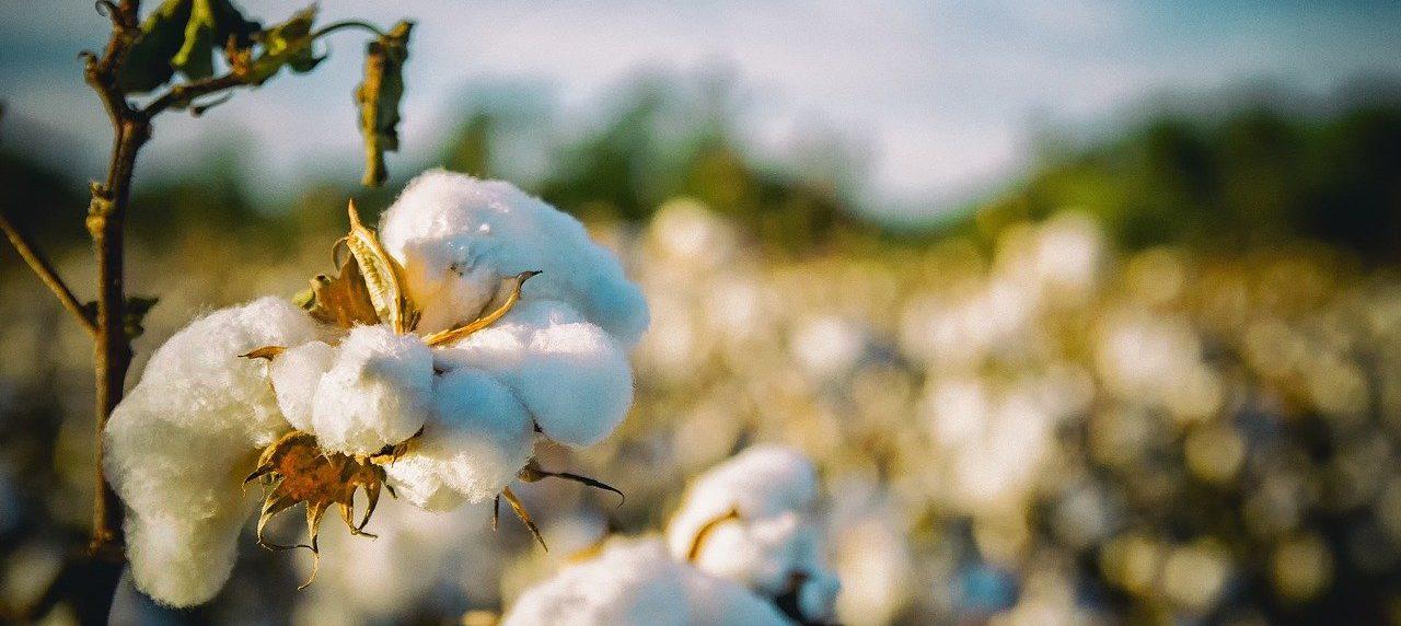 Wusstest du, wie schädlich billige Stoffe für die Umwelt sind?